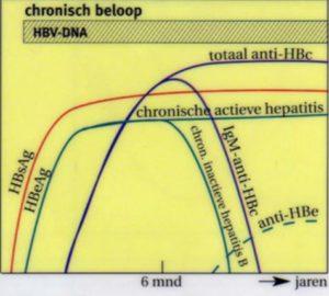 Hepatitis B voor verloskundigen en gynaecologen